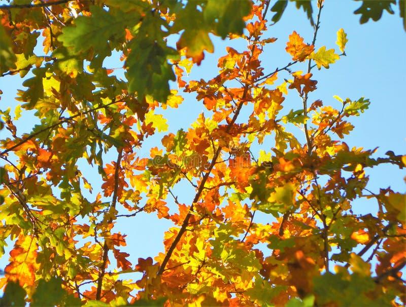 Feuilles d'automne colorées photo libre de droits