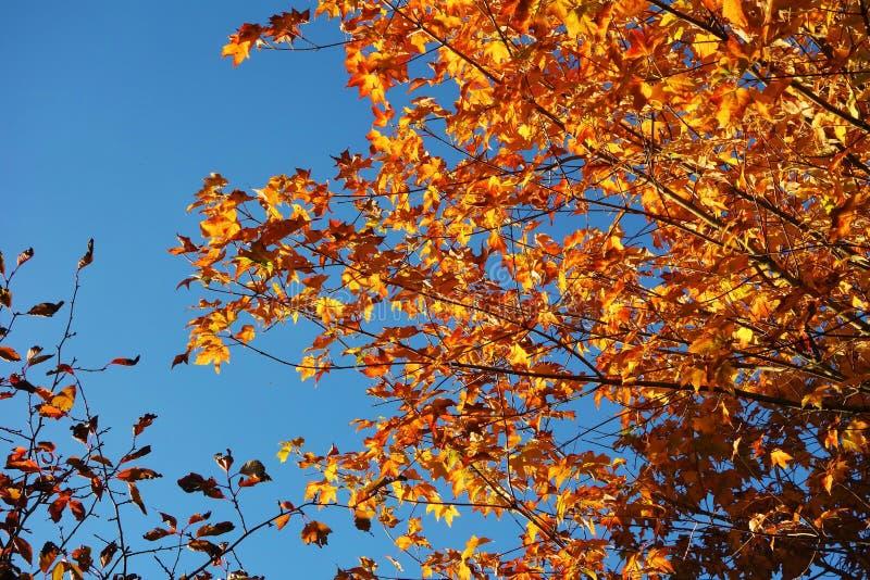 Feuilles d'automne colorées images libres de droits