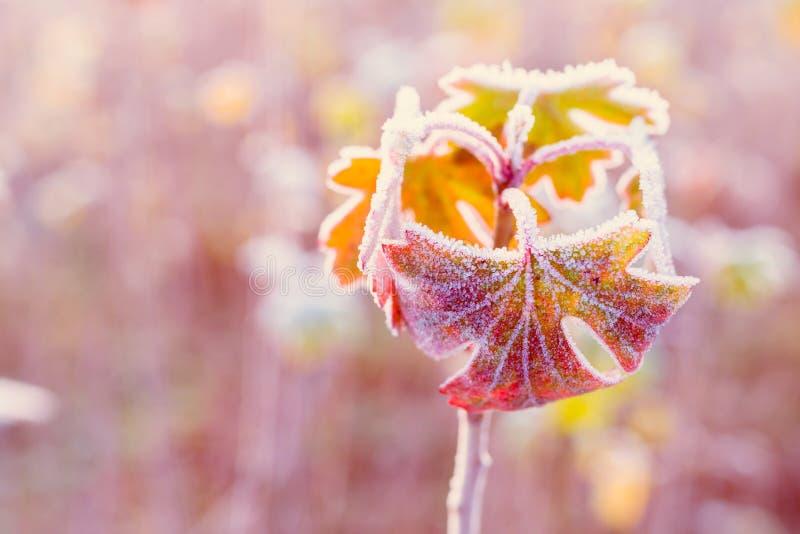 Feuilles d'automne congelées - profondeur de champ photographie stock