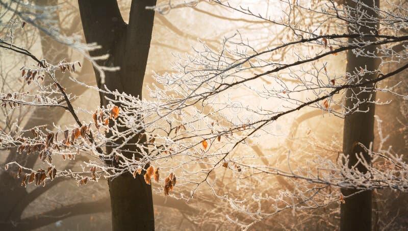 Feuilles d'automne couvertes dans la neige photo stock