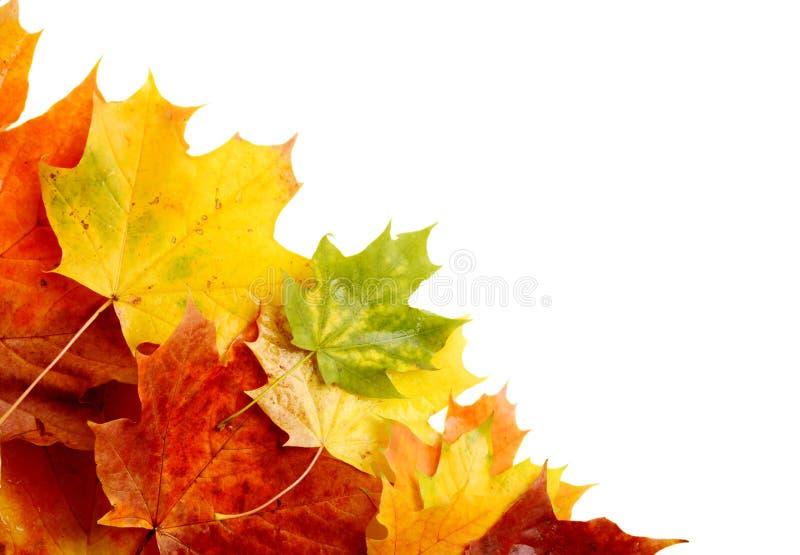 Feuilles d'automne dans le coin d'isolement sur le blanc photographie stock libre de droits