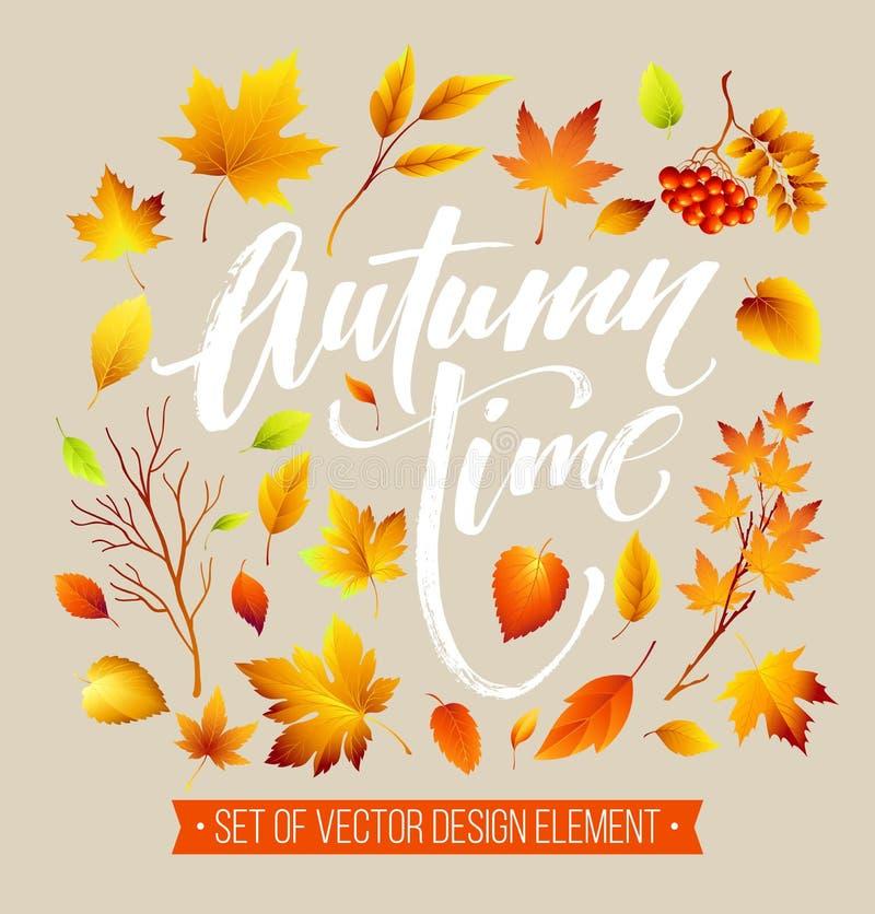 Feuilles d'automne de couleur sur le fond blanc Ensemble de feuille de chute Illustration de vecteur illustration libre de droits