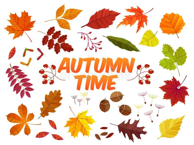 Feuilles d'automne de couleur sur le fond blanc Ensemble de feuille de chute Illustration EPS10 de vecteur illustration de vecteur