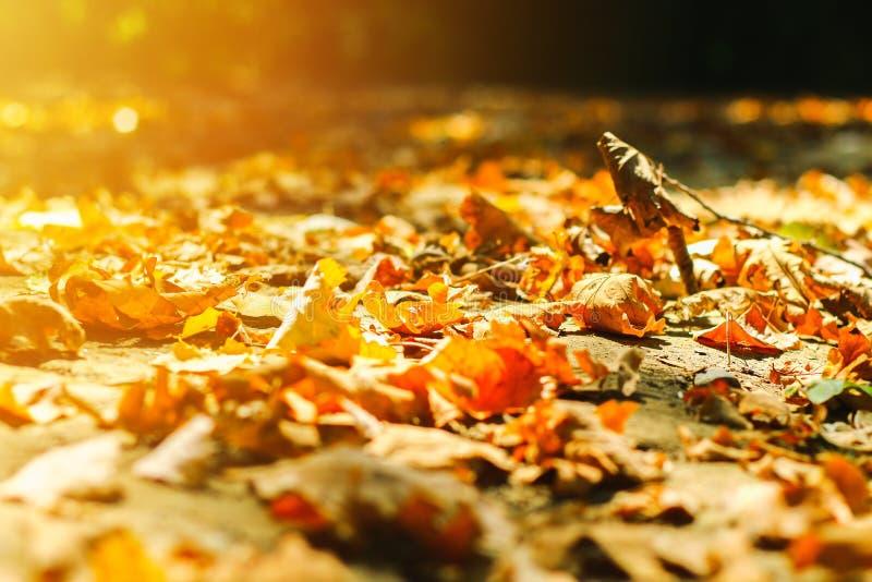 feuilles d'automne de feuilles d'automne de fond en parc sur terre, feuilles jaunes et vertes en parc d'automne image libre de droits