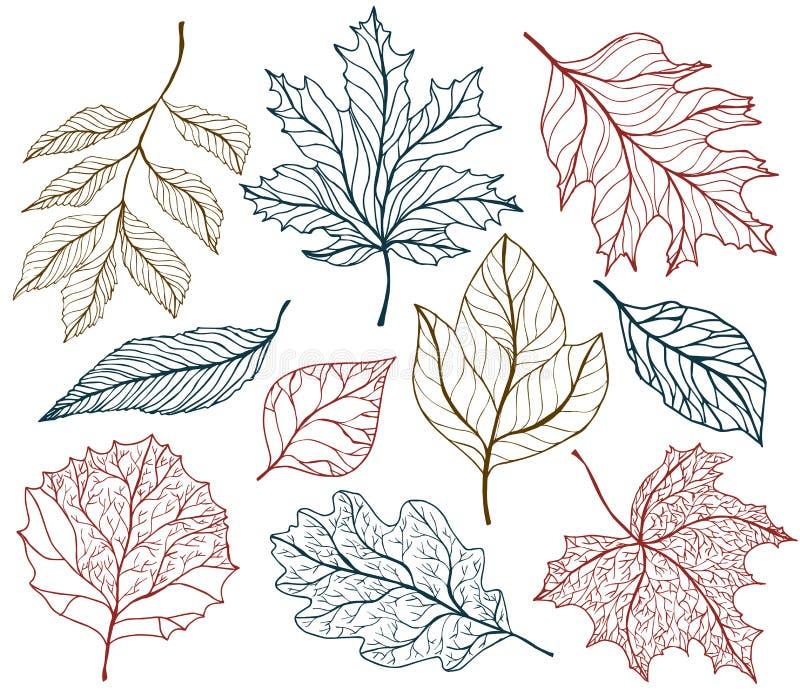 Feuilles d'automne de la sélection OD Illustration tirée par la main de vecteur illustration de vecteur