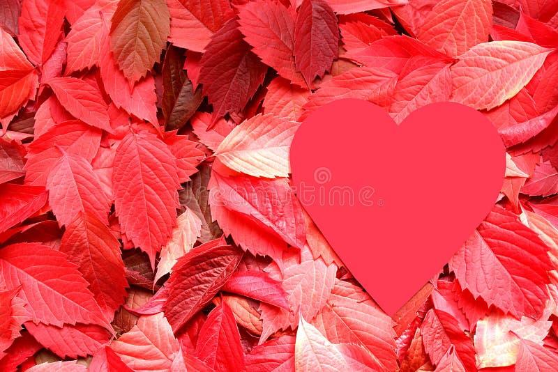 Feuilles d'automne de texture et coeur rouges de forme image stock