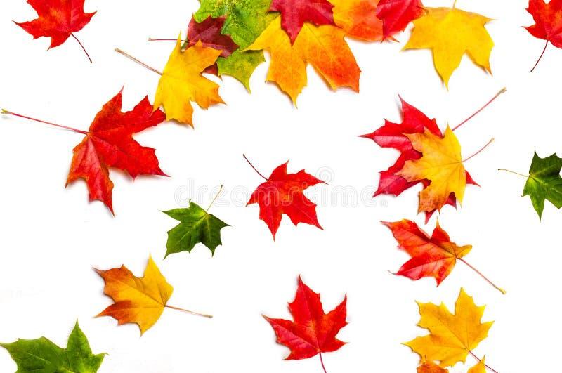 Feuilles d'automne en baisse d'isolement Modèle abstrait de chute Vol M photographie stock