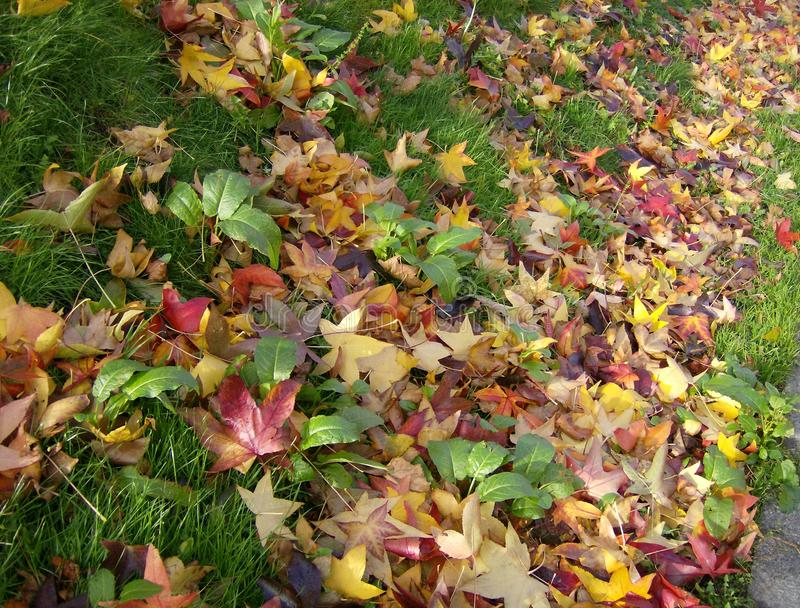 Feuilles d'automne en parc de Berlin photo stock