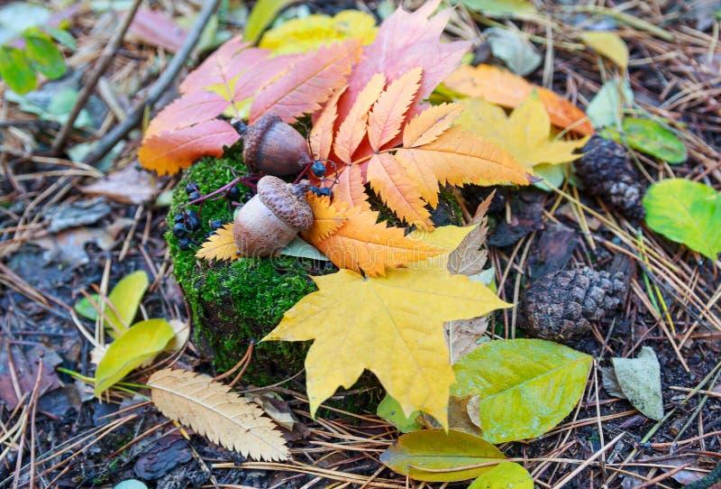 Download Feuilles D'automne Et Glands Colorés Photo stock - Image du baies, botanique: 76084094