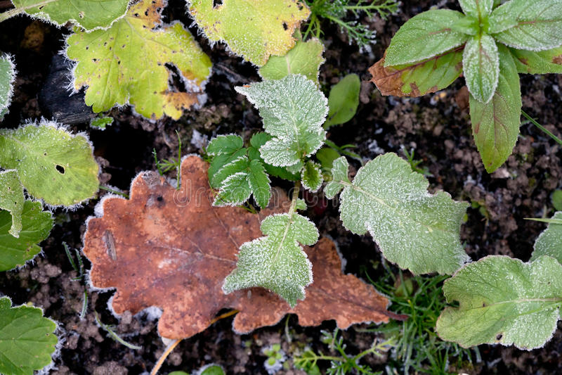Feuilles d'automne et modèle de gelée image libre de droits