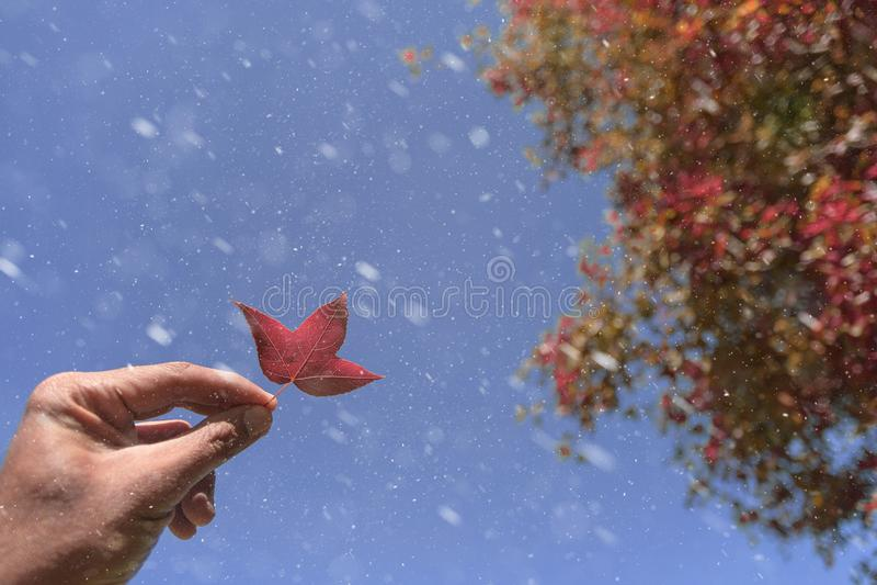 feuilles d'automne, foyer très peu profond, feuille d'érable et ciel bleu chez l'Asie photos libres de droits