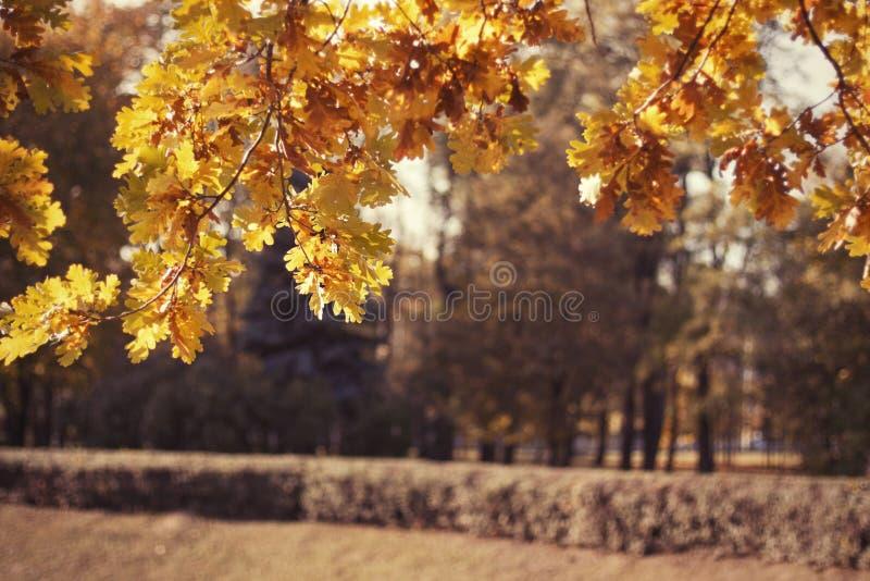 Feuilles d'automne jaunes photo stock