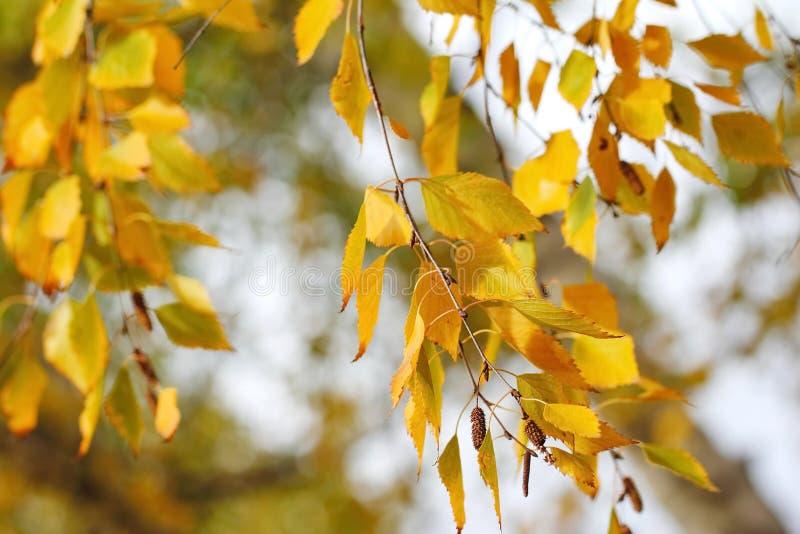 Feuilles d'automne jaunes sur le fond naturel images stock