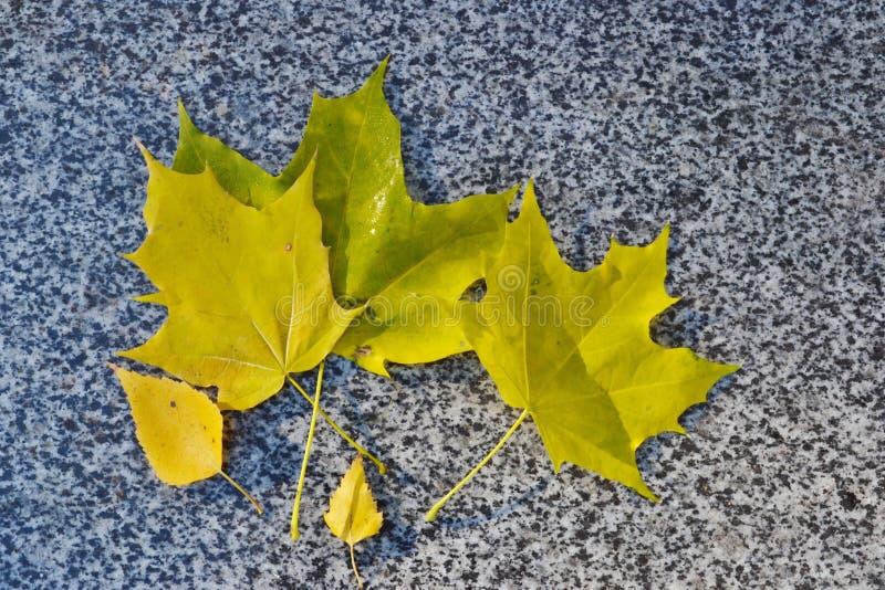 Feuilles d'automne jaunes sur le parapet du trottoir photographie stock