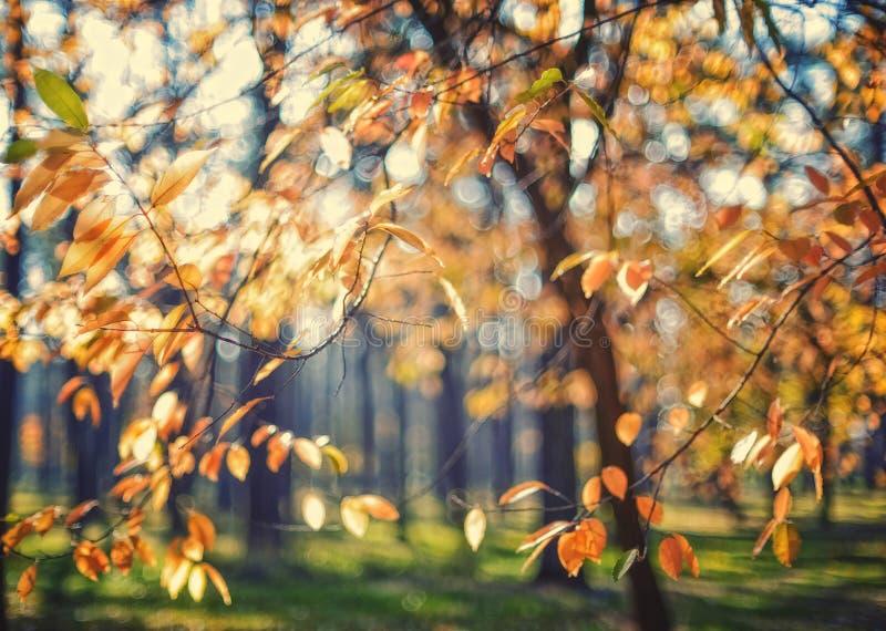 Feuilles d'automne jaunes sur un arbre photographie stock