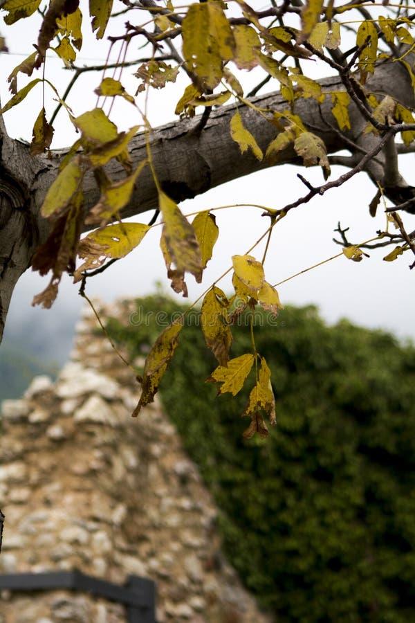 Feuilles d'automne jaunes sur une branche nue d'un arbre photos stock