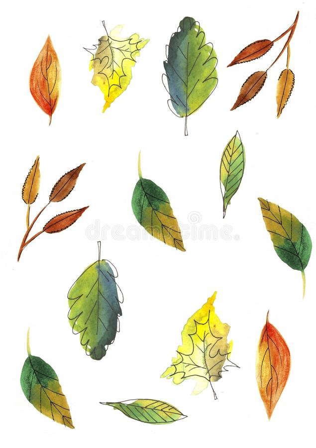 Feuilles d'automne r?gl?es d'isolement sur le fond blanc Illustration tir?e par la main d'aquarelle illustration stock