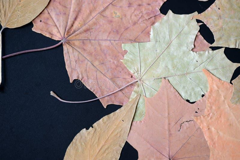 Feuilles d'automne sèches comme fond images stock