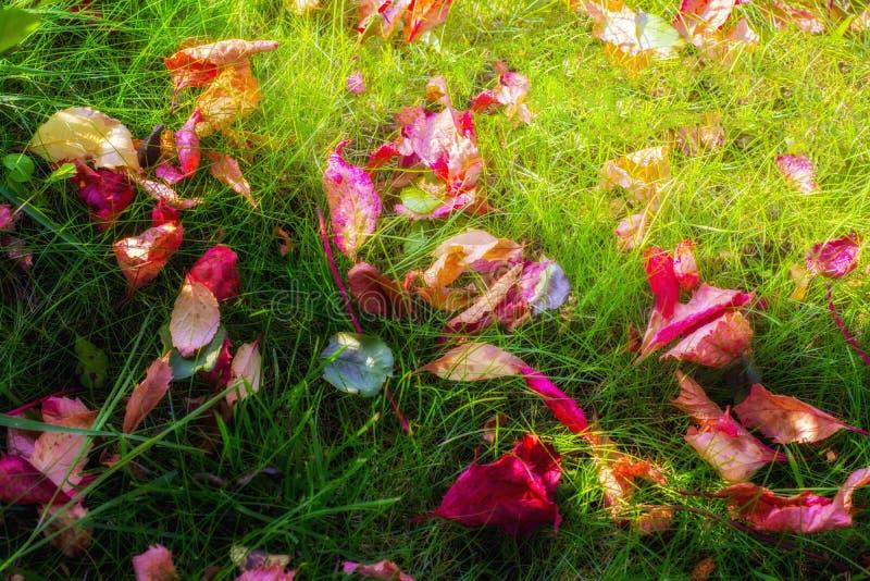 Feuilles d'automne se trouvant sur l'herbe verte photo libre de droits