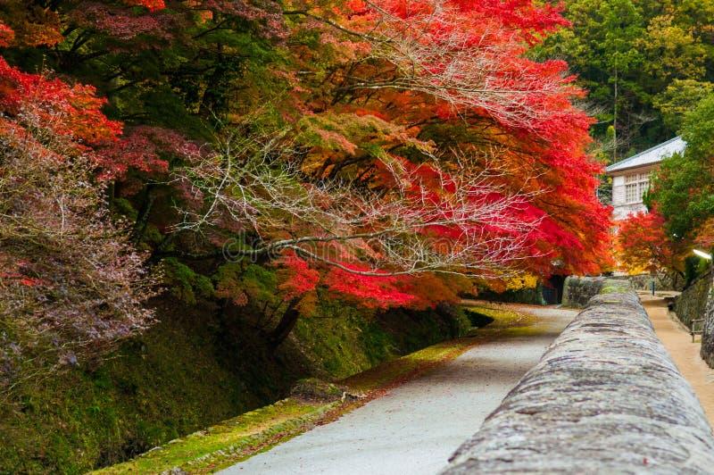 Feuilles d'automne Shizutani - à Okayama image stock