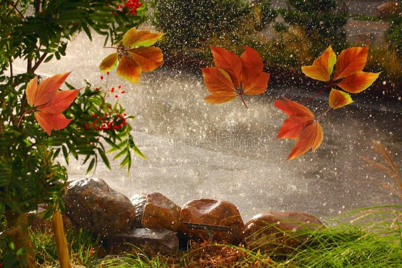 Feuilles d'automne soufflant autour par temps de pluie du vent i images stock