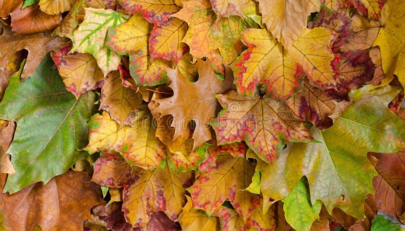 Feuilles d'automne sur le fond au sol Vue supérieure photos libres de droits