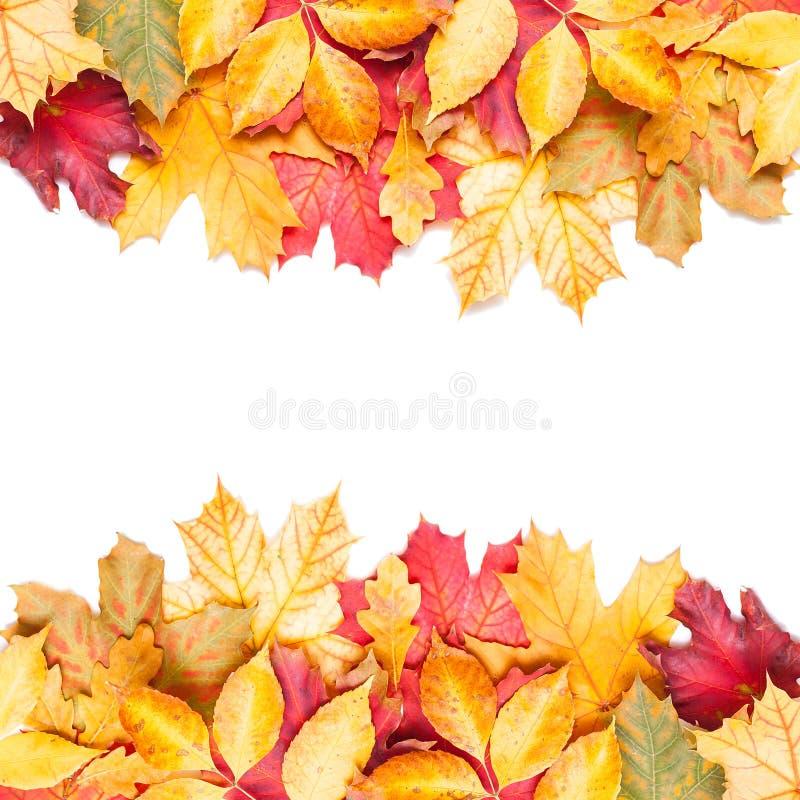 Feuilles d'automne sur le fond blanc
