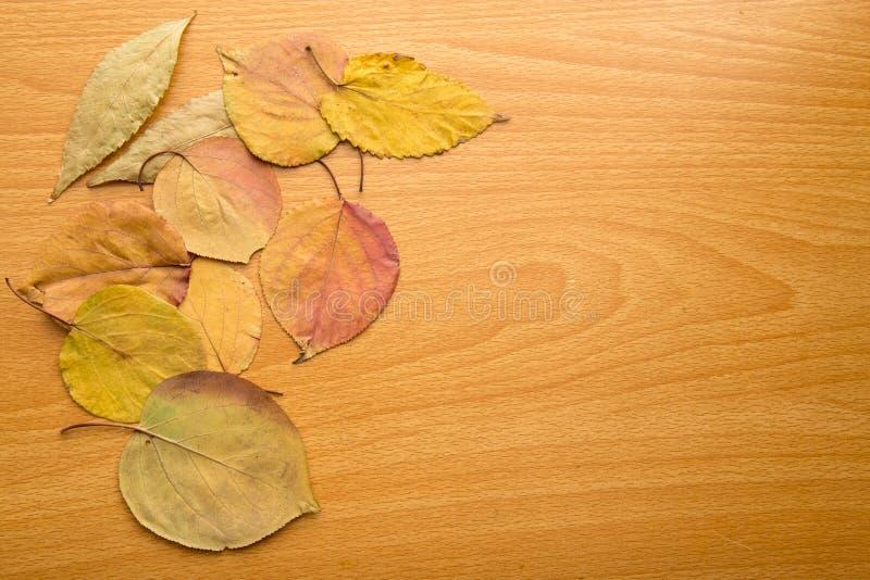 Feuilles d'automne sur un fond en bois photographie stock libre de droits