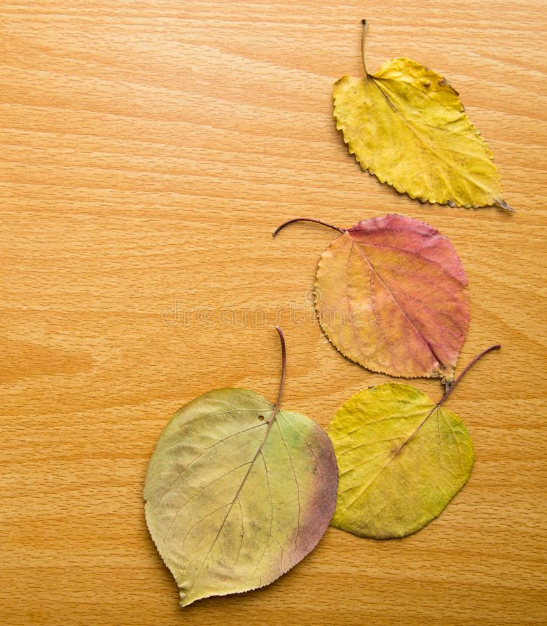 Feuilles d'automne sur un fond en bois photo libre de droits