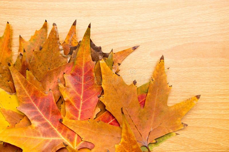 Feuilles d'automne sur un fond en bois photos stock