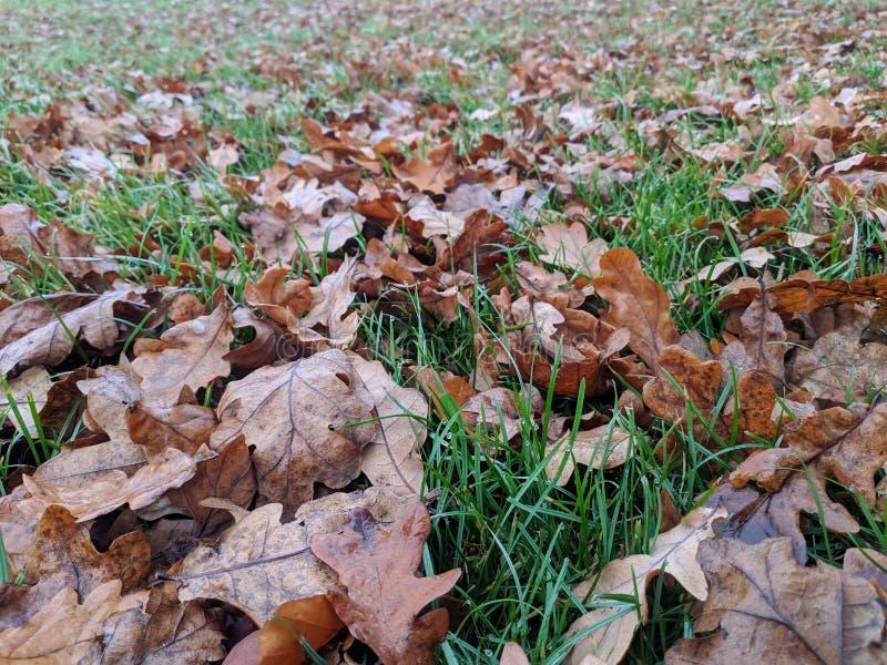 Feuilles d'automne tombées couvertes de rosée image libre de droits
