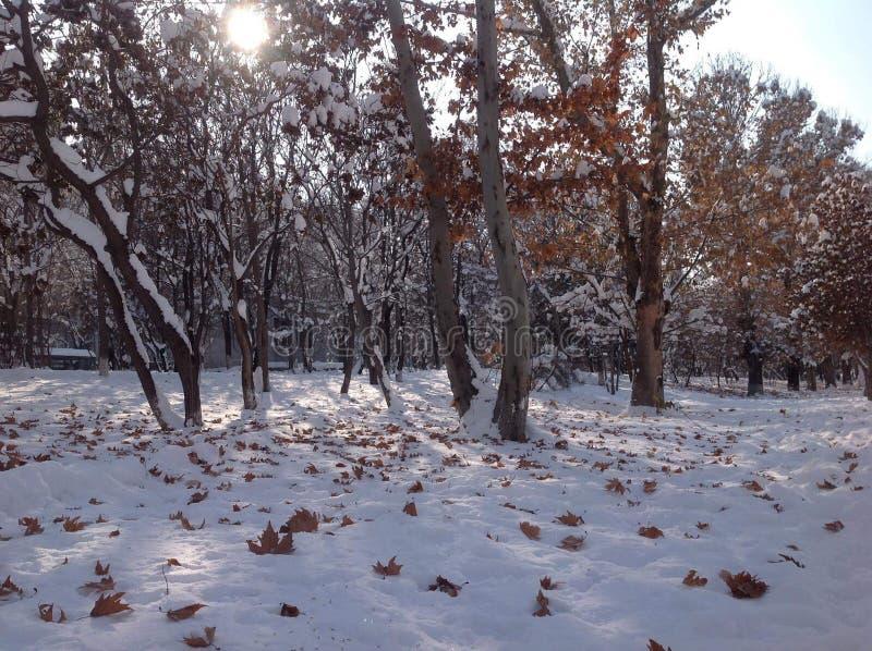 Feuilles d'hiver et d'automne au coucher du soleil images stock
