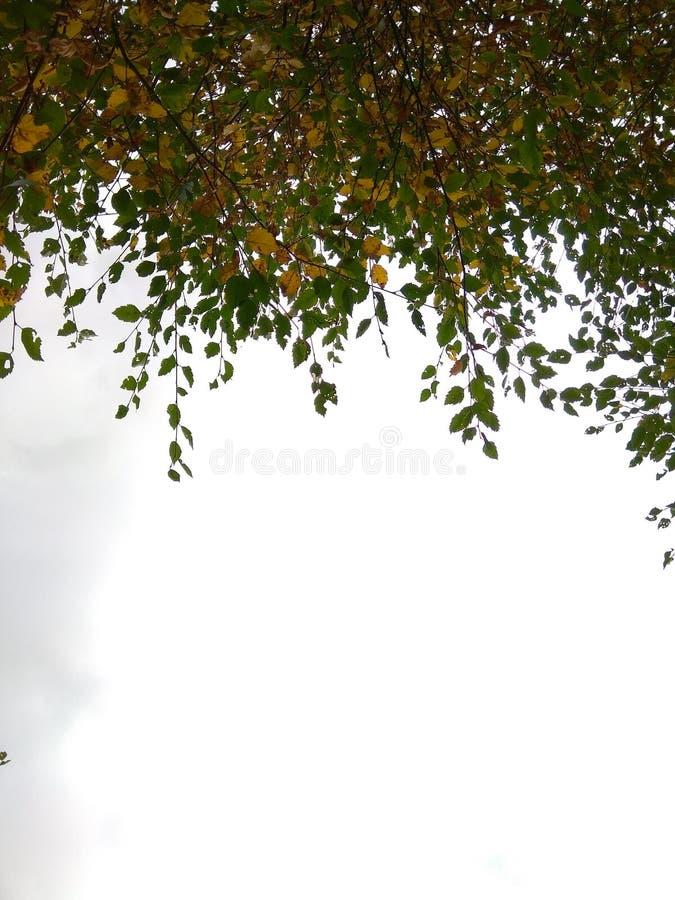 Feuilles d'une vue d'arbre de dessous photo libre de droits