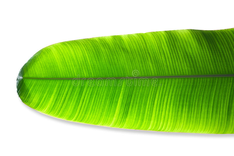 Feuilles de banane d'isolement sur le fond blanc photo stock