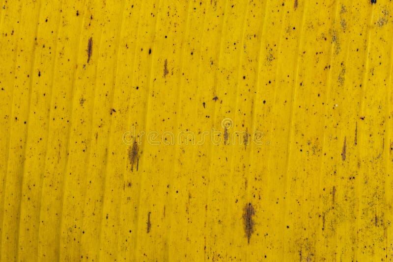 Feuilles de banane de modèles et de textures, vert, jaune coloré et sec Plan rapproché du fond f sélectif d'abrégé sur texture de photographie stock