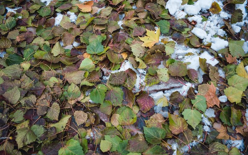 Feuilles de chute dans la neige image stock
