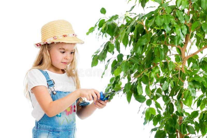 Feuilles de coupe de fille de jardinier d'arbre images stock