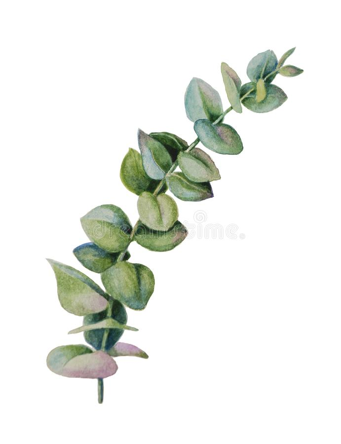 Feuilles de dollar en argent et branches d'eucalyptus illustration de vecteur