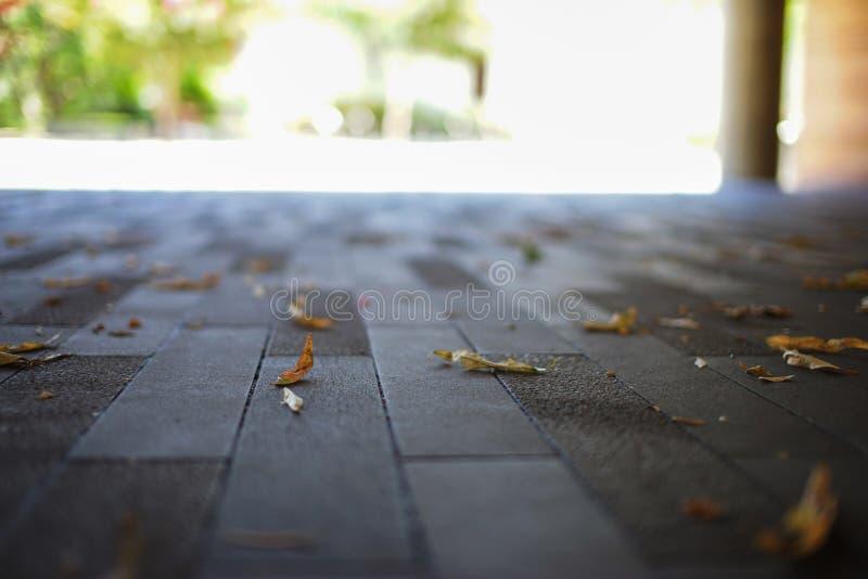 Feuilles de jaune au sol photos libres de droits