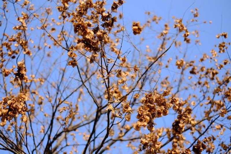 Feuilles de jaune des arbres image stock