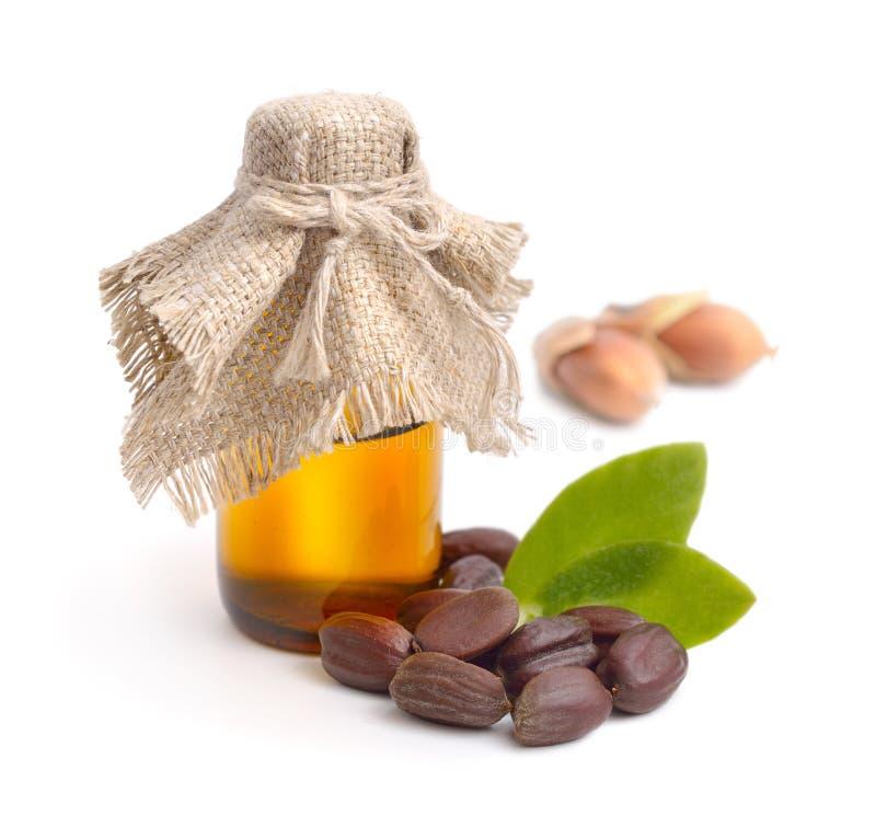 Feuilles de jojoba (Simmondsia chinensis), graines avec de l'huile photo stock