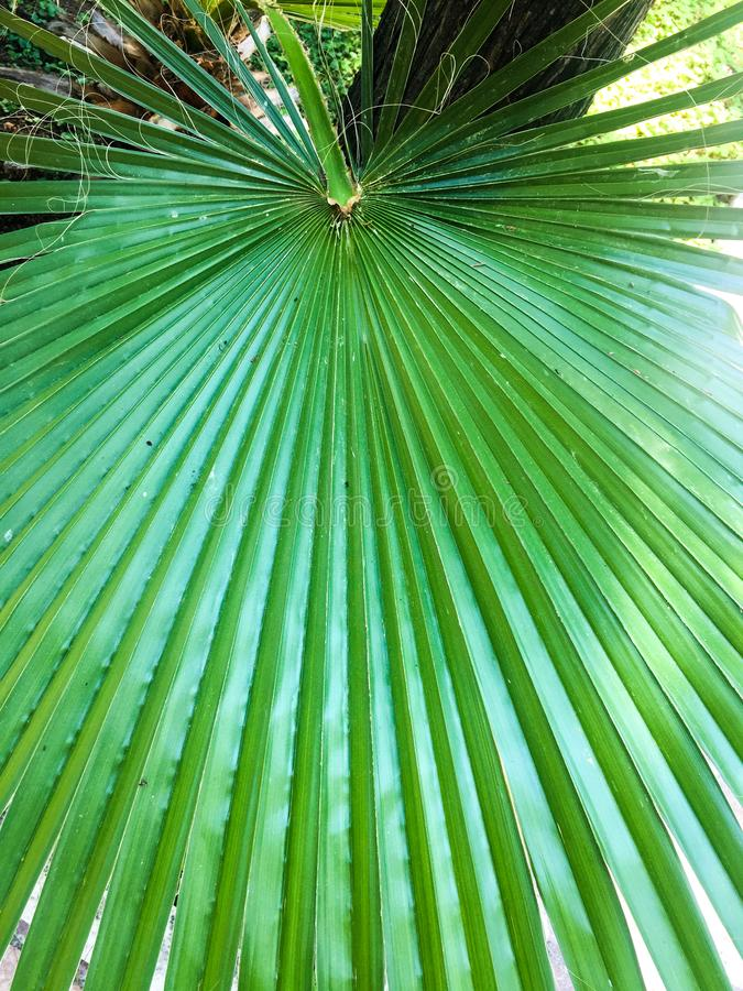 Feuilles de jungle de forêt tropicale photo libre de droits