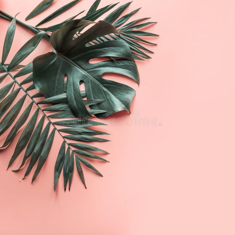 Feuilles de monstera et de paume sur le rose Fermez-vous, d'isolement avec l'espace de copie photos libres de droits