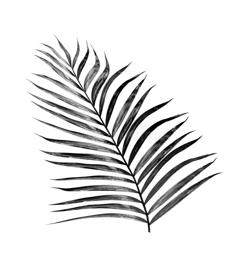 Feuilles de noir de palmier photographie stock libre de droits