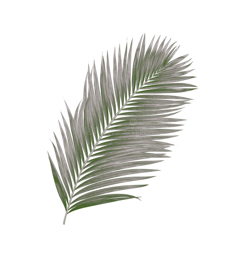 Feuilles de noir de palmier photographie stock