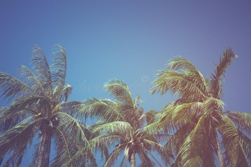 Feuilles de noix de coco sur un fond de ciel bleu, filtre de vintage photos stock