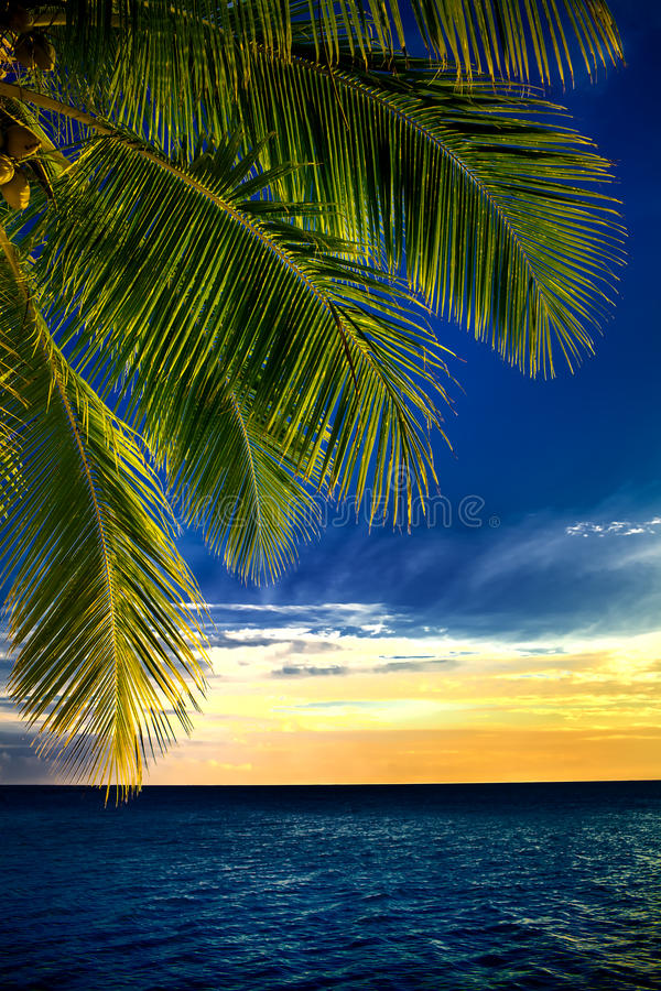 Feuilles de palmier de noix de coco au-dessus d'océan sans fin image stock