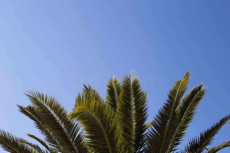 Feuilles de palmier sur le ciel bleu Copiez l'espace image stock