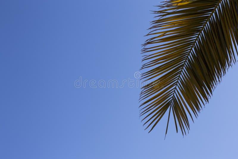 Feuilles de palmier sur le ciel bleu Copiez l'espace photographie stock libre de droits