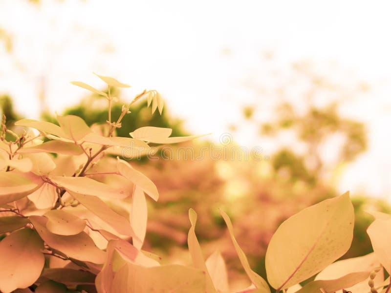 Feuilles de papier peint de photo, macro, arbres, fond, arbre, papier peint, feuilles d'automne en baisse de feuilles jaunes au-d image stock